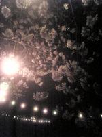 Yozakura_110403