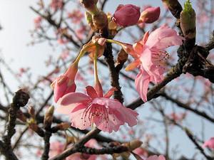 Sakura_140202
