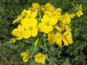 Flower_140322_2
