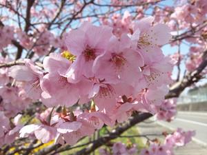 Flower_140322_31