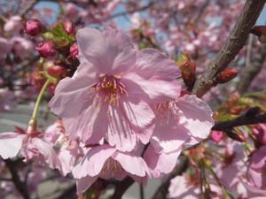 Flower_140322_32