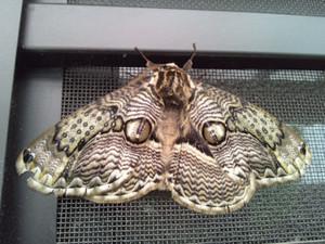 Moth_140427_1