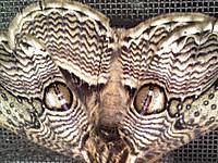 Moth_140427_2