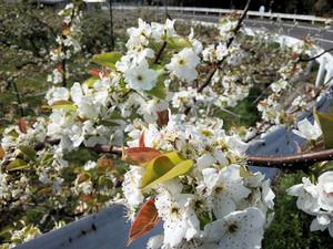 Flower_150411_1