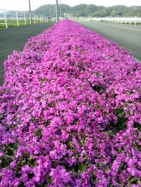 Flower_150411_2