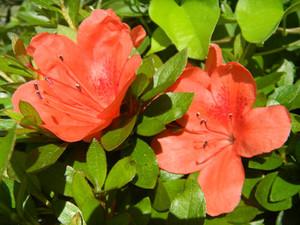 Flower_160515_1