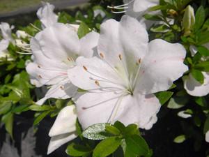 Flower_160515_2