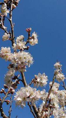 Flower_170312_1