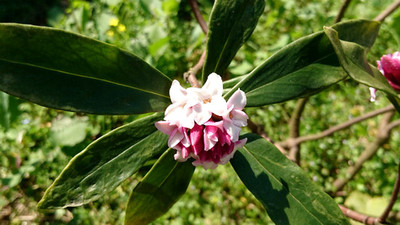 Flower_170312_2