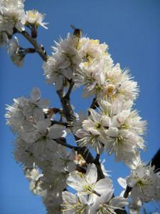 Flower_180310_1