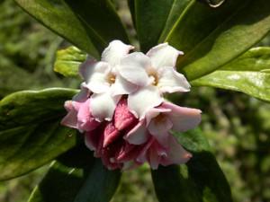 Flower_180310_2